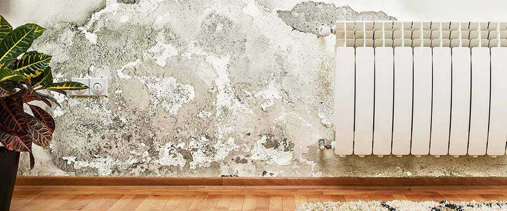 home inspector mold